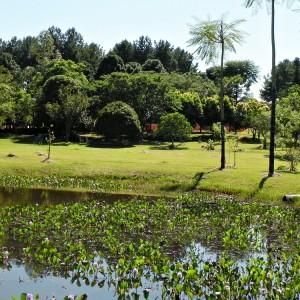 Lago guapuruvus