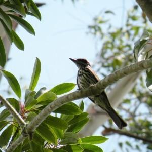 Pássaros na Transmaq